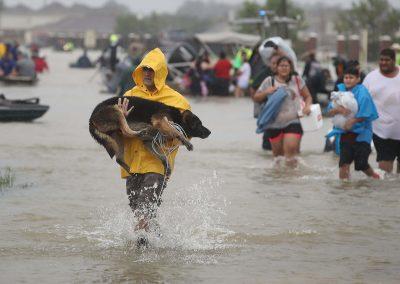 Harvey Dog Save